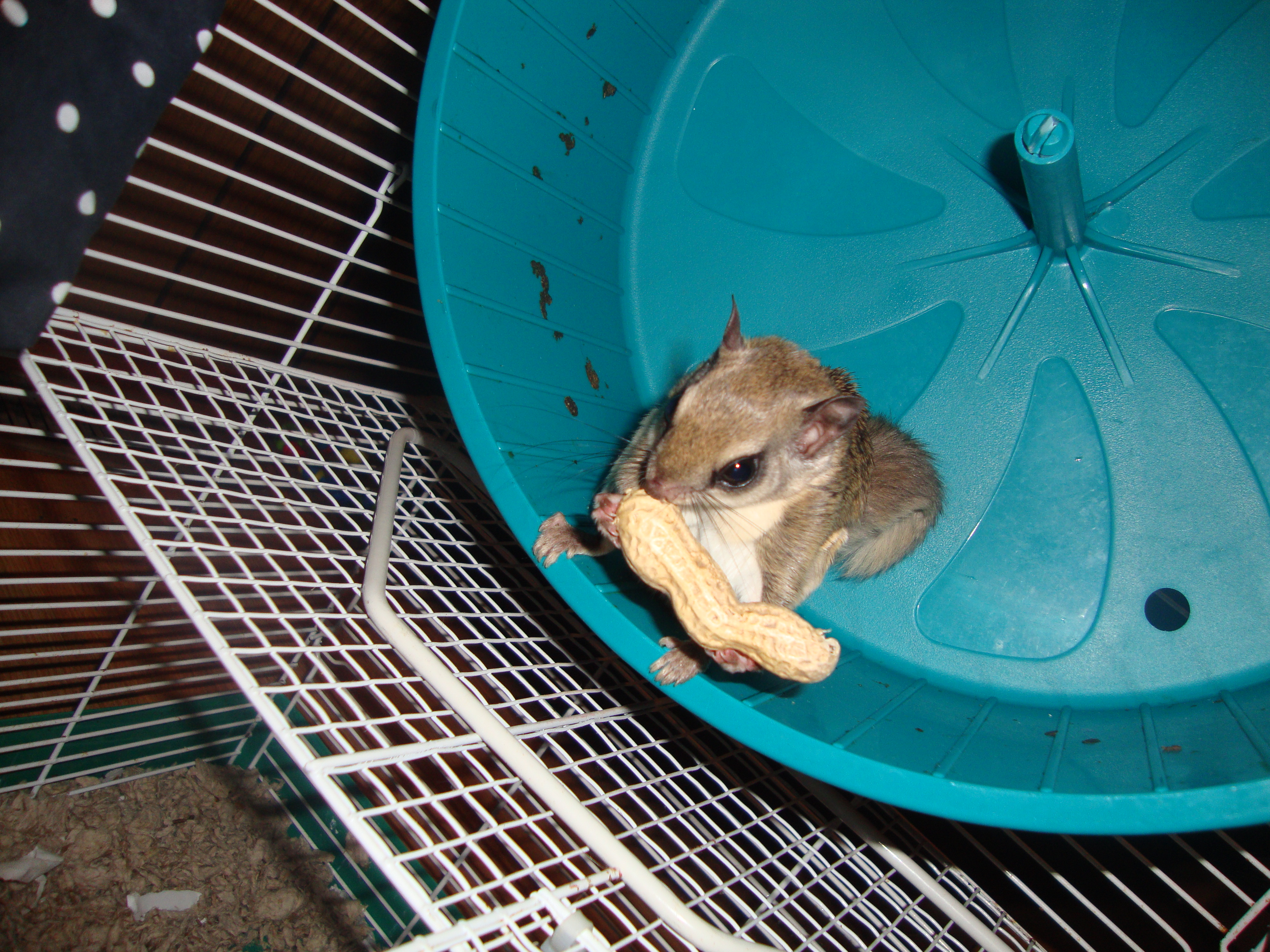 Predators of the Southern Flying Squirrel | Sciencing